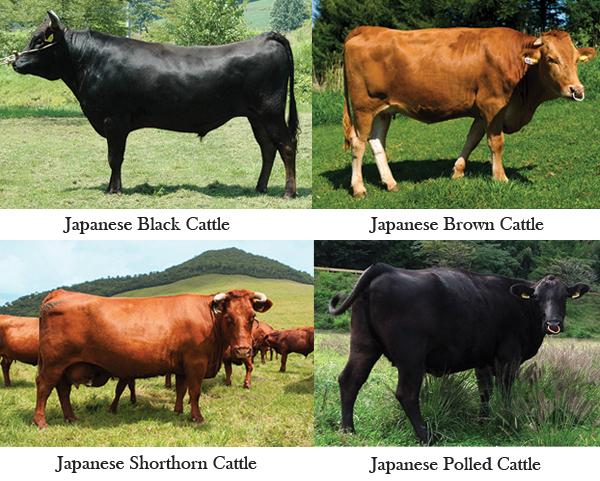 和牛四種2